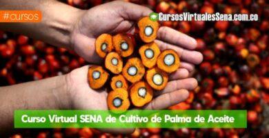 curso de palma de aceite virtual sena