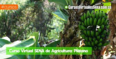 curso de banano sena virtual