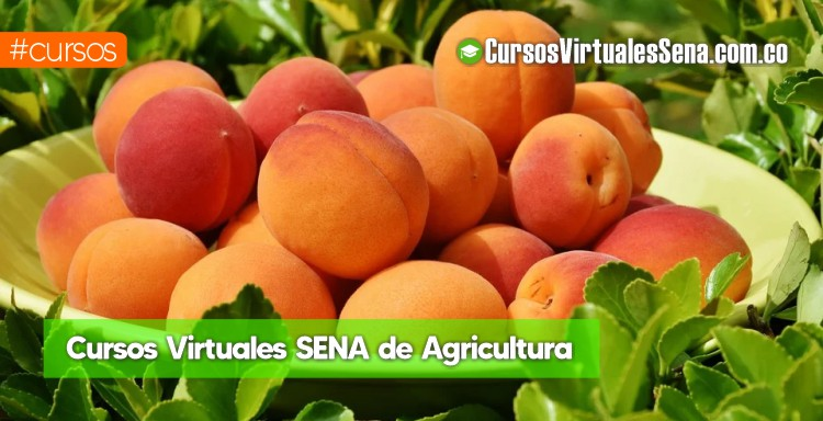 cursos de agricultura virtuales gratis